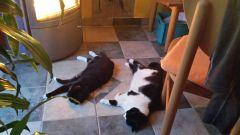 Im Winter vor dem Ofen mit der anderen Katze oder ...