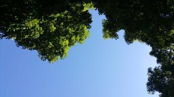 Der Blick von der Parkbank nach oben