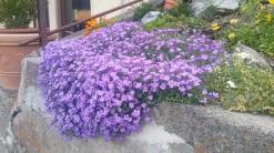 Frühling in Mürren