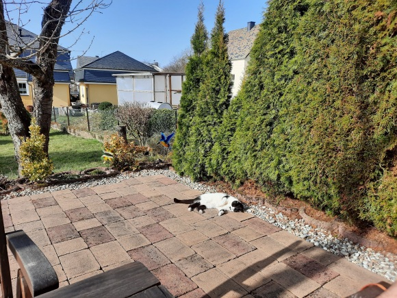 Ein Sonnenbad mitten im Februar für die alte Katzi